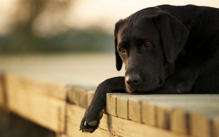 Szívférgesség kutyáknál – A szúnyogok megjelenése négylábú kedvenceinkre is veszélyes!