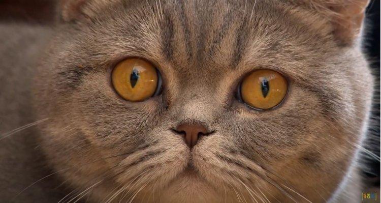 Mi a teendőnk, ha kiscica érkezik a családba? Állatorvosi tanácsok macskatartáshoz!