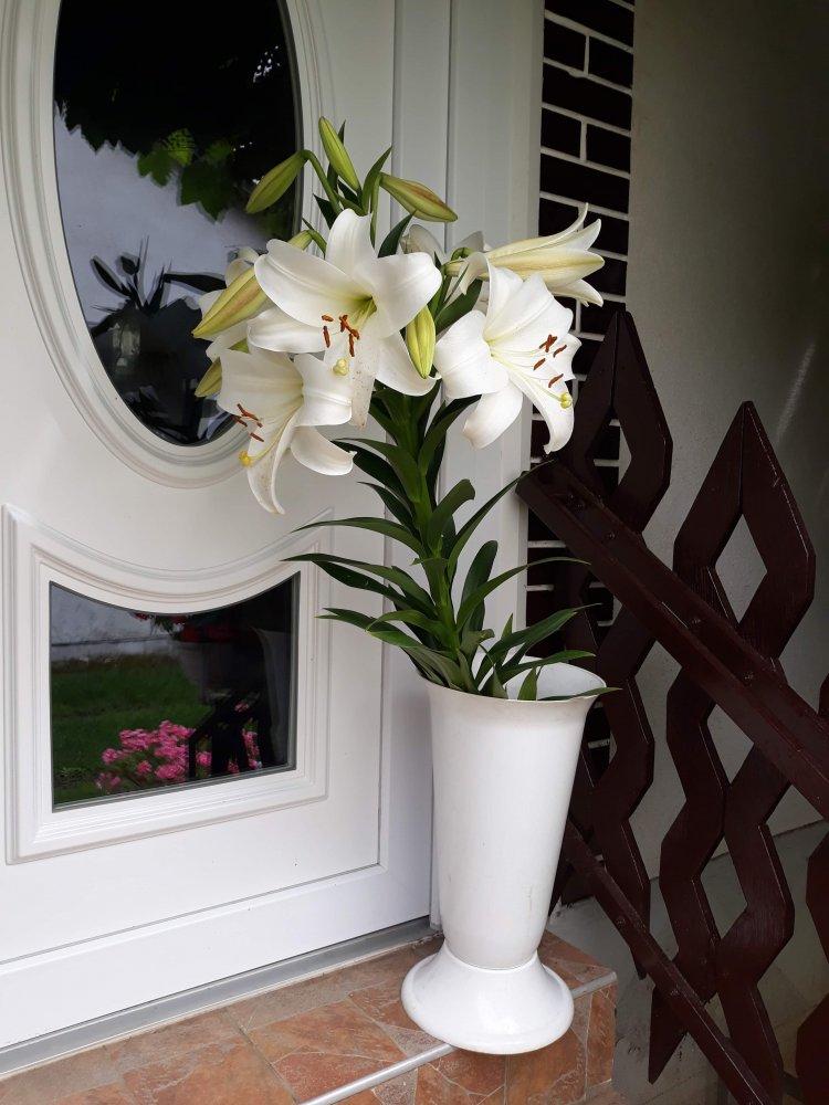 Ilyen óriás liliomot sem látni minden nap! Közel másfél méteresre nőtt meg!