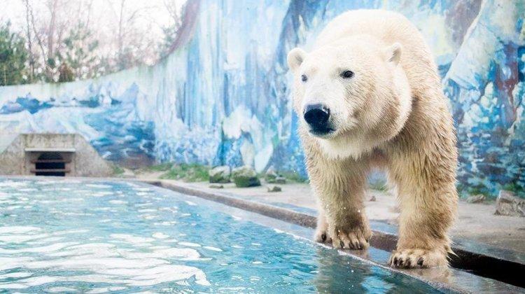 Egyre többen érkeznek a Nyíregyházi Állatparkba: Gajdos Lászlót kérdeztük a Sziesztában
