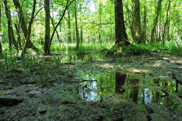 Örökítsd meg nyári élményeidet a Nyírségben! – Fotópályázatot hirdet a Nyírerdő