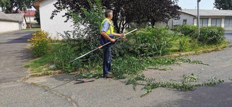 A lakó-pihenő övezetek fáit vágják és ritkítják a NYÍRVV szakemberei Örökösföldön