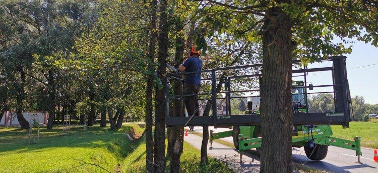 Még biztonságosabb közlekedés – Gallyazási munkálatokat végeznek a Belső körúton