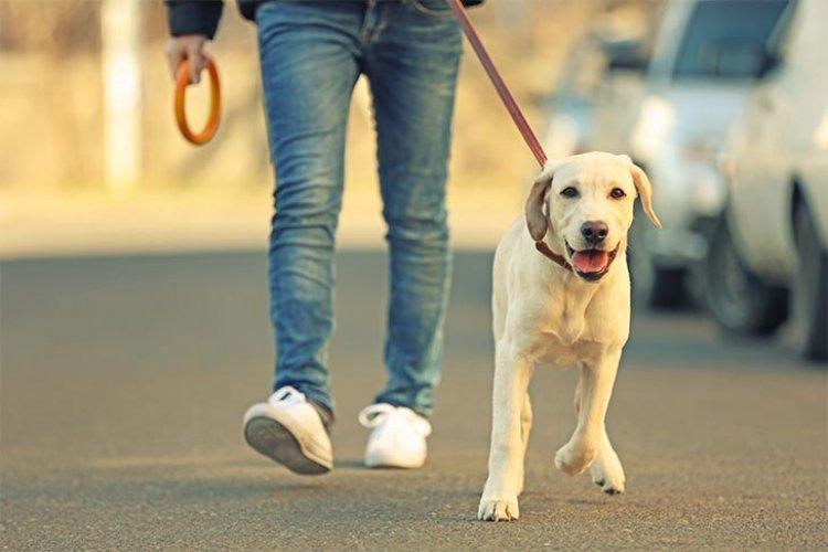 A nyíregyházi kutyások nagy része betartja a kutyasétáltatáshoz kapcsolódó szabályokat!