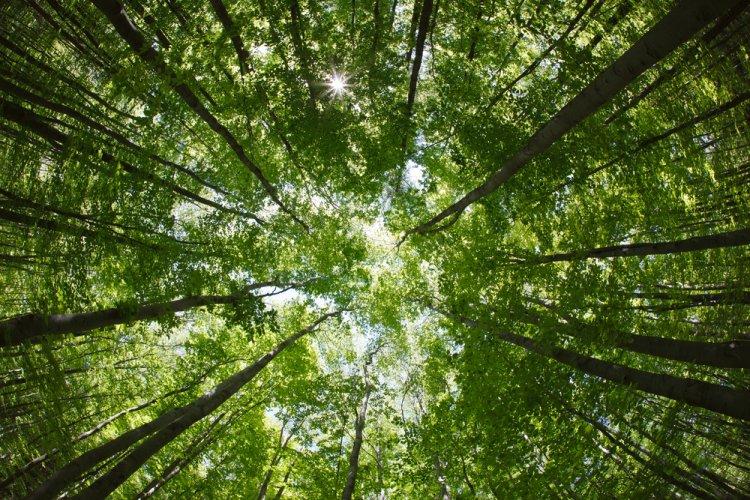Augusztus utolsó hetében fakitermelés kezdődik a Sóstói-erdőben