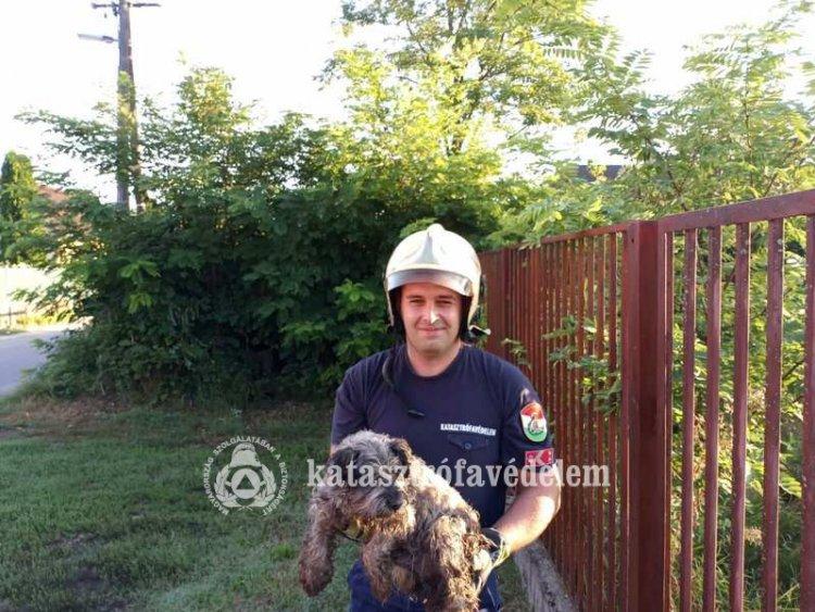 Megható! Ebet mentettek a tűzoltók Nyíregyházán a kutyák nemzetközi napján