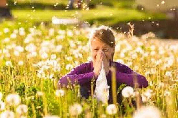 Az allergiások rémálma: csúcson a pollen koncentrációja