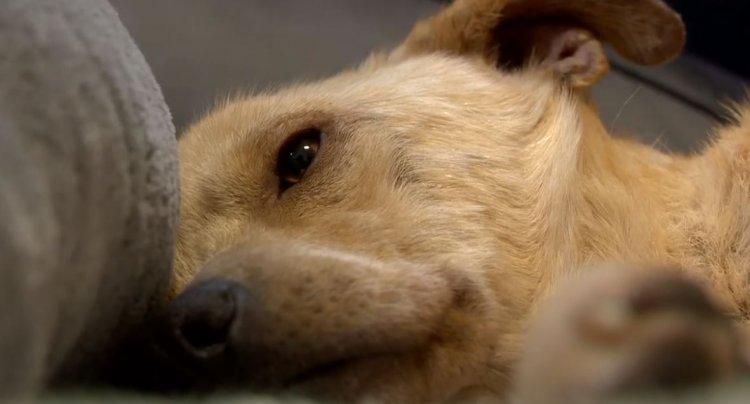Állati Zoona - Egy autóbalesetet szenvedett kutyus nem mindennapi története!