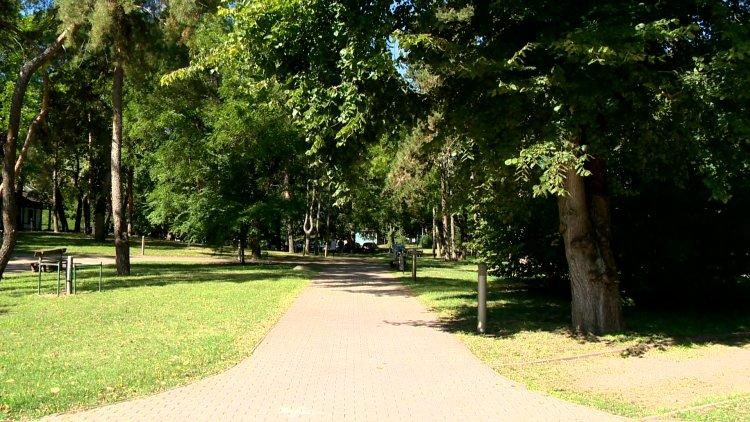 Parkrendezés – Huszonhárom eldeformálódott fát vágnak ki Sóstón, helyükre újakat ültetnek