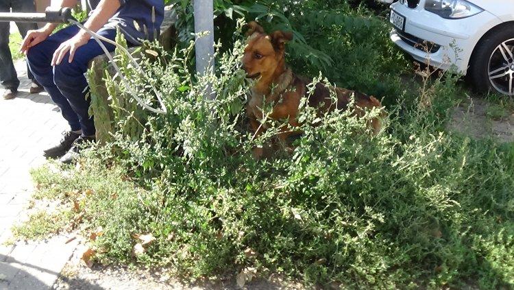 Megharapott egy kóbor kutya egy járókelőt csütörtök délelőtt a Síp utcán