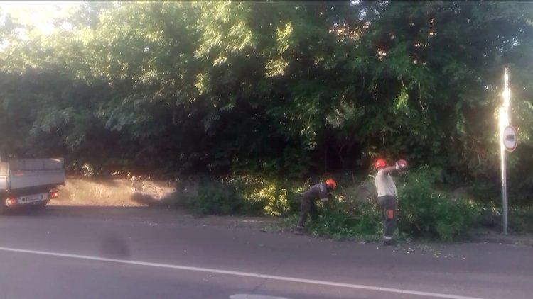 Favágási munkálatokat végeztek a NYÍRVV munkatársai a Garibaldi utcán