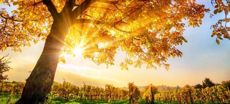 Ma is élvezhetjük az őszi nap sugarait - Nagyrészt derült vagy gyengén felhős idő várható