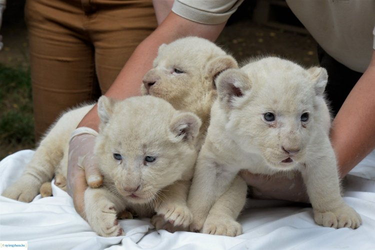 Bébibumm – Idén közel száz apróság született a Nyíregyházi Állatparkban!