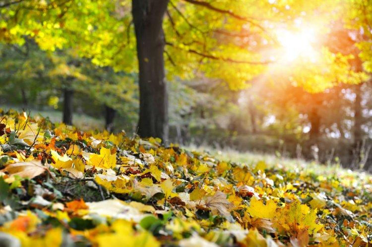Napsütéses őszi napunk lesz vasárnap - Estig nem valószínű számottevő csapadék