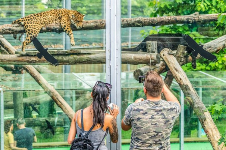 Téliesítenek a Nyíregyházi Állatparkban - A hópárduc és a kis panda most sokkal aktívabbak