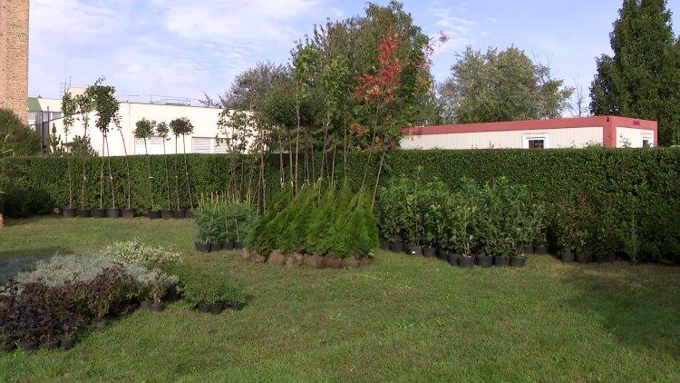 """""""Ültess egy fát a holnapért!"""" – Kiosztották az igényelt növényeket a lakosság részére"""