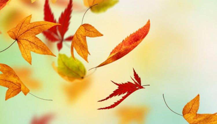 Országos Meteorológiai Szolgálat: az ősz még a kellemes arcát mutatja