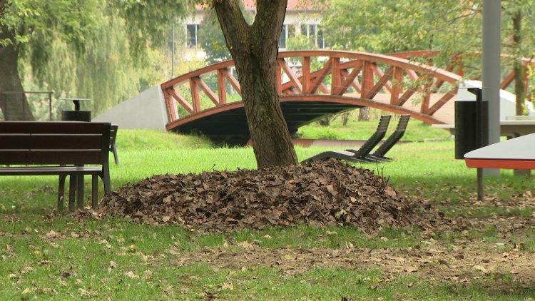 Ősz a parkokban – Ültetés és takarítás a NYÍRVV-nél
