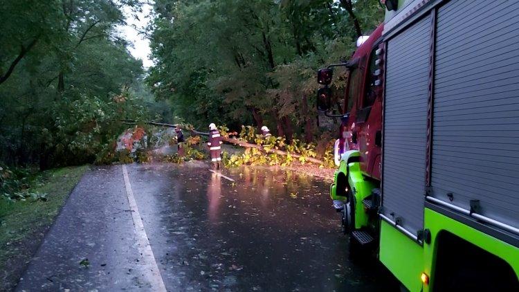 Egy nagy fát borított a Sóstói útra az erős, viharos szél szerdán kora reggel