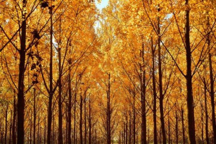 Országos Meteorológiai Szolgálat: csendes, őszi idővel indul a hét