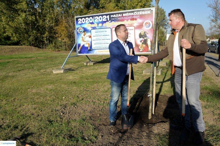 70 darab facsemetét ültettek el a Tüzér utcán – Folytatódik a nagyszabású fásítási program