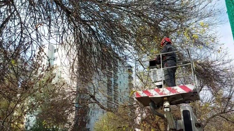 A város több pontján is favágási munkálatokat végeznek NYÍRVV munkatársai
