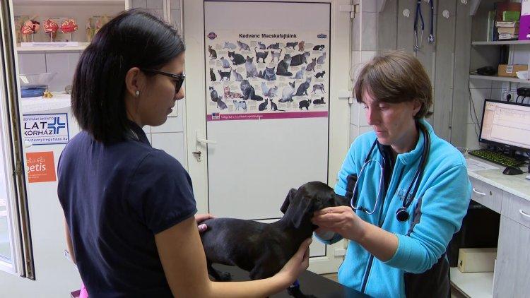Vigyázzunk kedvenceinkre – állatorvosi tanácsok kutyabaj ellen
