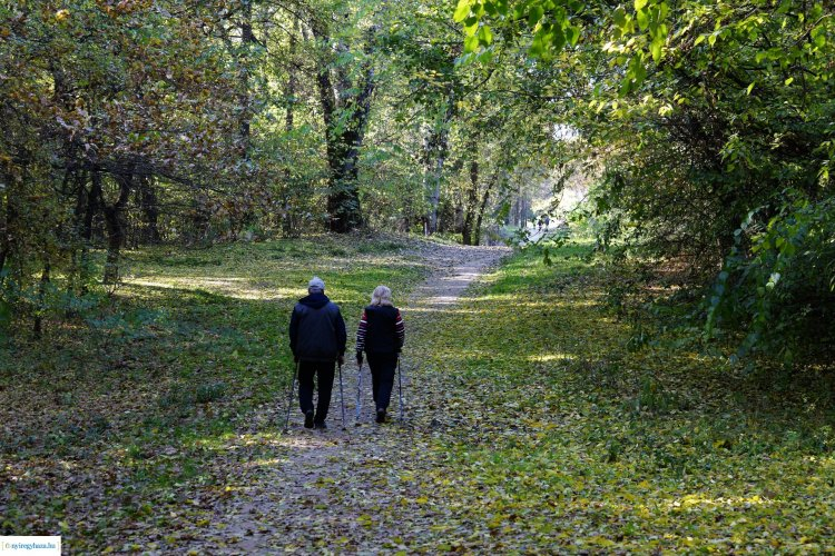 Csodás az ősz Nyíregyházán is! Ezer színben pompázik az erdő!