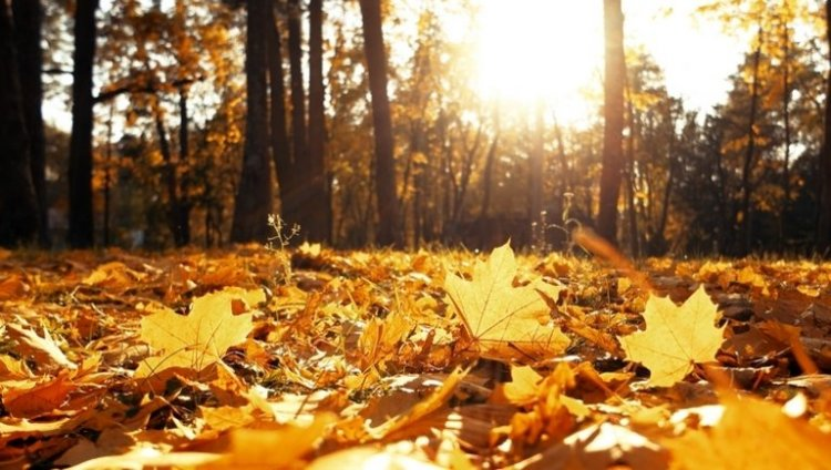Napsütéssel köszönt be a november - 15 fok is lehet napközben