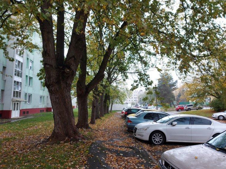 Favágási munkák a Ferenc körúton, kedd 7 órától ne parkoljanak az érintett szakaszon