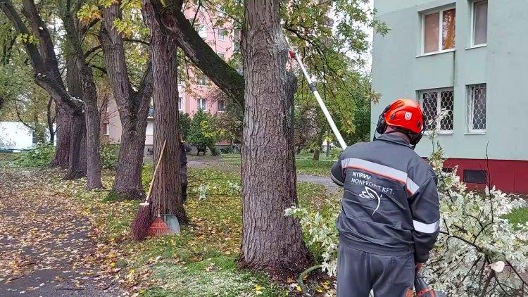 Kedd reggel megkezdődött a Ferenc körúton a fák száraz ágainak levágása