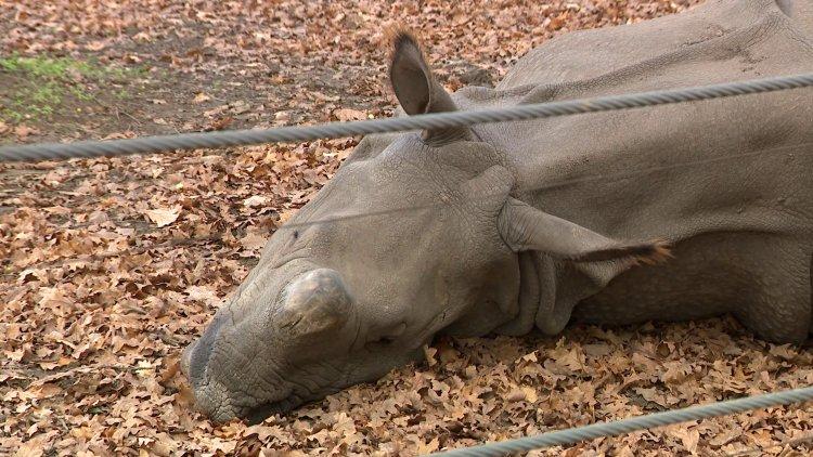 Húsvétra elkészül az India-ház – Európa legmodernebb rinocéroszháza épül Nyíregyházán