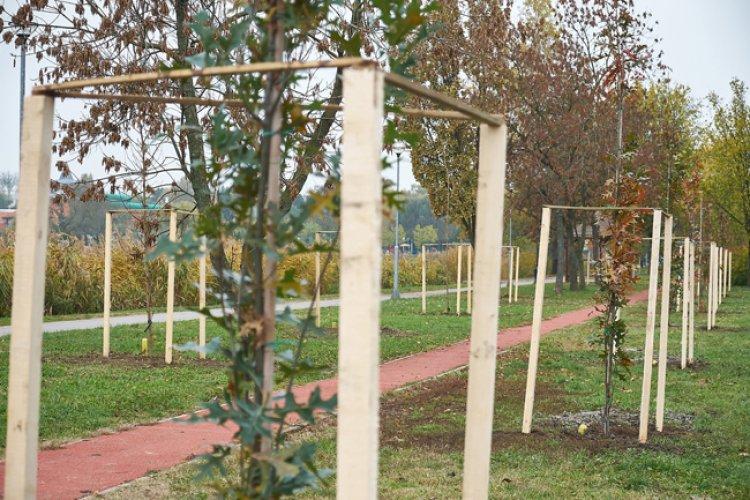 190 fát ültetnek el Sóstón 50 nyíregyházi gazdasági szereplőnek köszönhetően