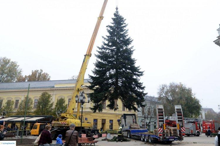 17 méteres a város karácsonyfája – Ünnepi fények igen, vásár azonban idén nem lesz