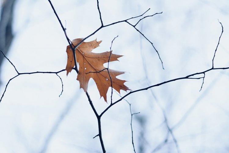 Közelít a tél - Fokozatosan hűl az idő a jövő héten