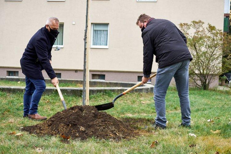 Faültetés – Idén ősszel már több mint 250 fát ültettek el városszerte