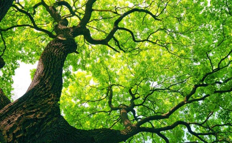 Tizenhat érv a fák mellett – miért fontosak, és miért jó, hogy a közelünkben vannak?