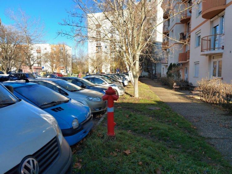 Favágási munkálatokat végeznek a Kossuth utca egy részén, lezárták a parkolókat