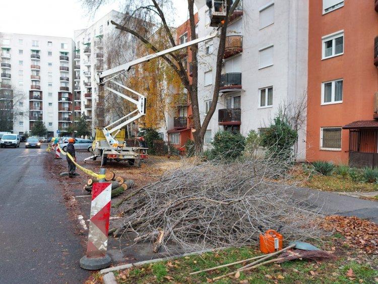 Gallyazási munkálatok kezdődtek az Erdő soron, forgalomkorlátozás mellett