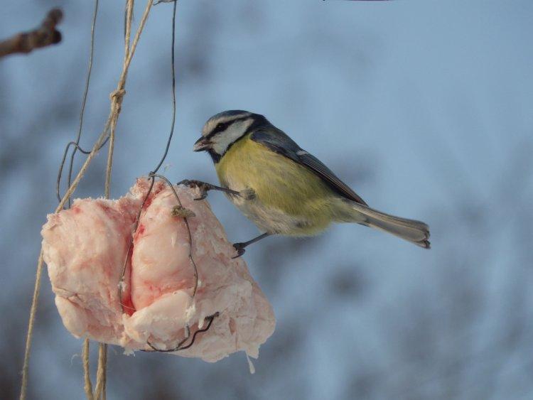 Téli madáretetés: miket, mivel, mikor hol és milyen etetővel?