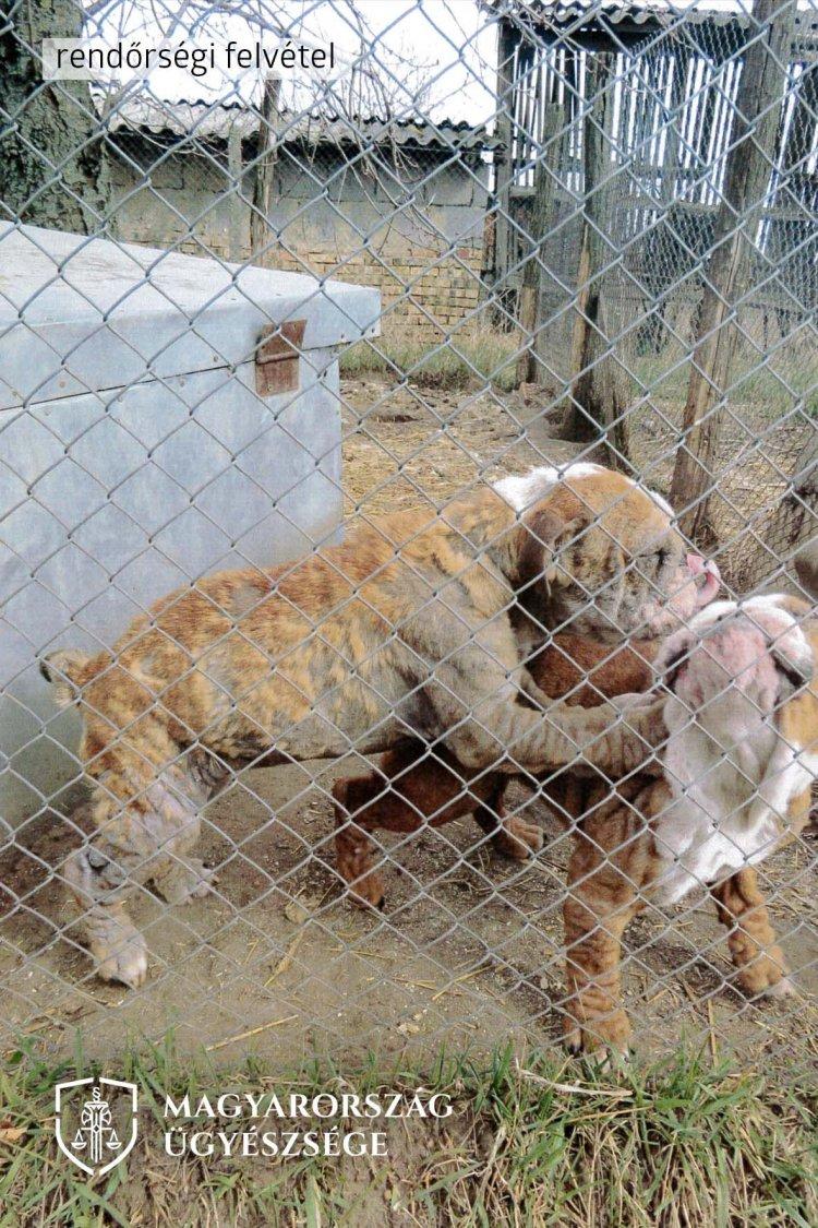 166 kutyát mentettek ki a nyírbogáti tanyákról