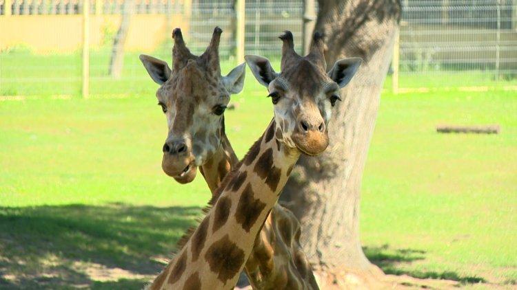 Az állatvilág csodálatos rekordjai – Legek a Nyíregyházi Állatparkban