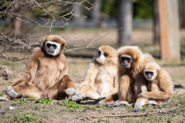 A Nyíregyházi Állatpark cukiságai is élvezték a mai napsütést
