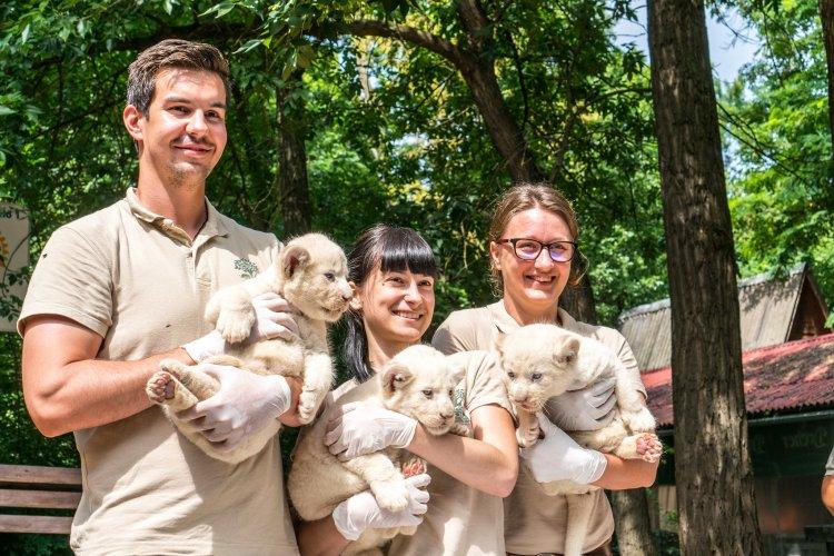 A tavaszi nehézségek ellenére sikeresen zárult a 2020-as év, a Nyíregyházi Állatparkban