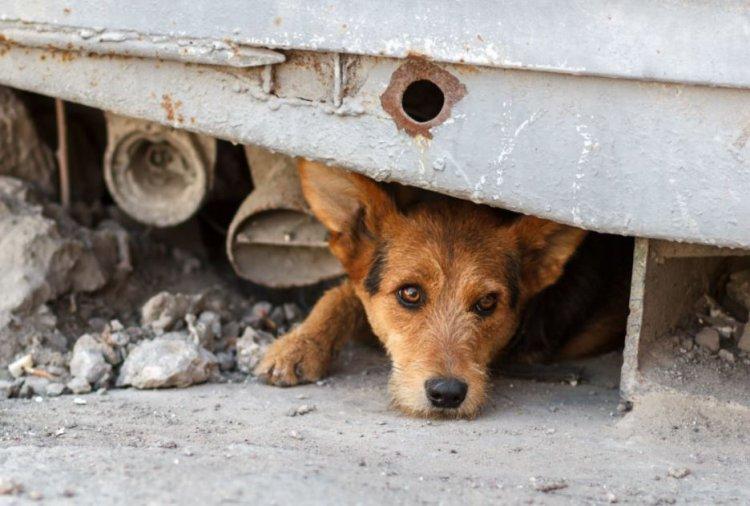 Az állatvédők felmentést kapnak szilveszterre a kijárási tilalom alól