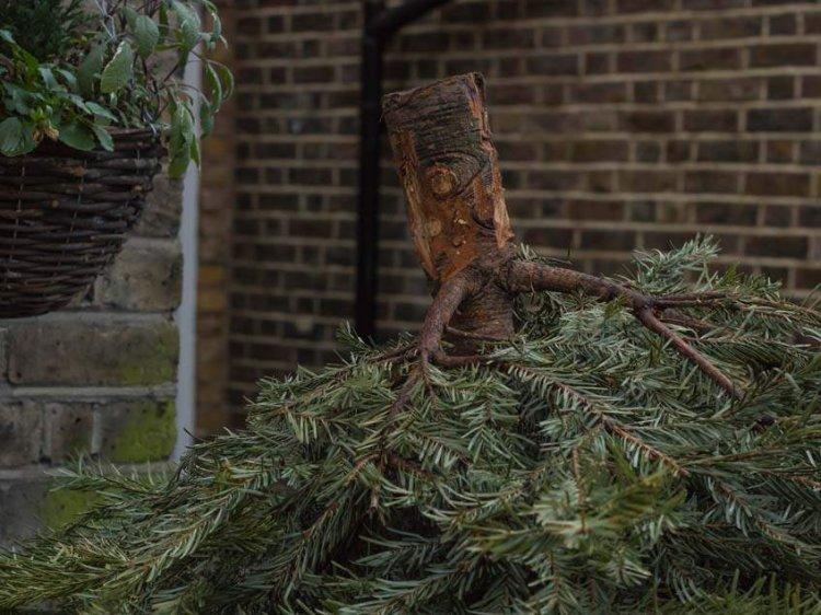 Társasházi lakásból kidobott fenyőfa akadt fenn egy nagy méretű fán Nyíregyházán