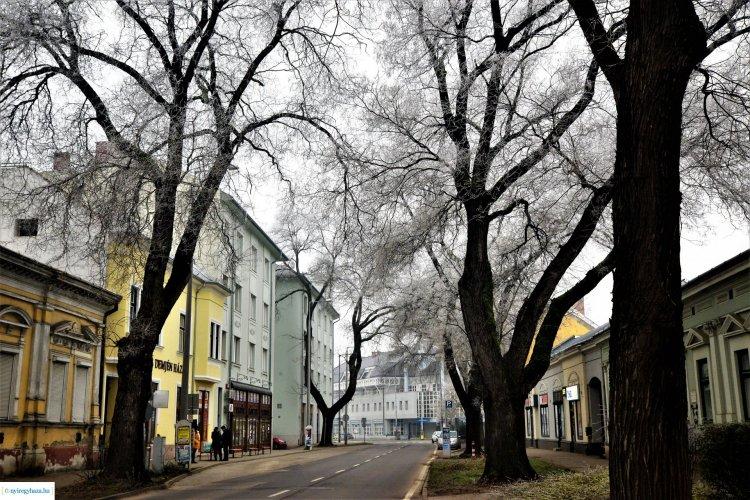 Meseszép! Zúzmara borítja a fákat Nyíregyházán! Fotókon a város!