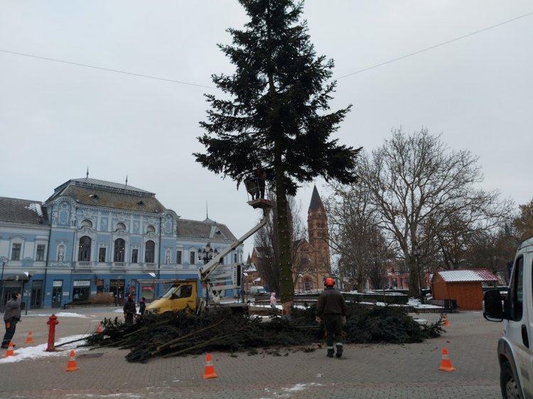 Hétfőn reggel lefűrészelték és elszállították a város karácsonyfáját a Kossuth térről
