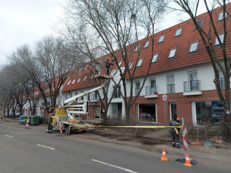Befejezte a faápolási munkálatok végzését a városüzemeltető társaság a Szegfű utcán