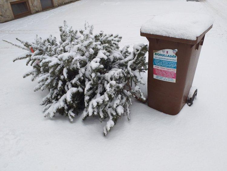 Hatvanezer karácsonyfát dobtak ki Nyíregyházán - Komposzt lesz belőlük
